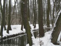 rzeka_2.jpg
